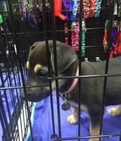 My New Doggie Bella :)