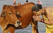 How Animals are seen in Hinduism