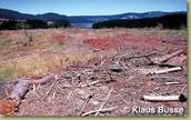 Loss in habitats