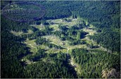 Selective logging