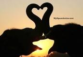 Elephant's