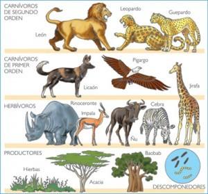 Ecosistema De Animales