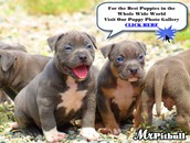 they are blue nose