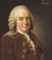 This is Carolus Linnaeus.