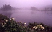 Evaporation Fog
