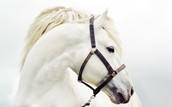 Aimará - Feldenkrais para ti y tu caballo.