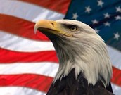 Bald eagle being proud to be free, because that's what we do in America