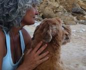 Madrid Curso Animal Communicator y Conciencia animal 2o. Nivel