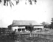 The henderson horse farm