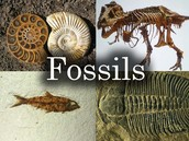 what can fossils tell us about Earth?