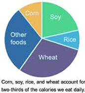 Wheat is In our Daily Lives!
