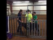 Special Needs Livestock Show