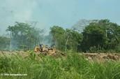 Perdiendo Los Árboles* en Panamá