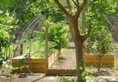 Compared - Rudimentary Elements For permaculture training