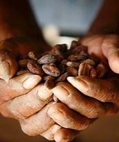 Although cocoa beans is mostly used to make chocolate there us other uses for it as well