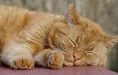 Wat is een katvriendelijke woning?
