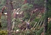 Why Loggers are the Problem?