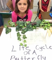 Layla-Life Cycle of a Butterfly
