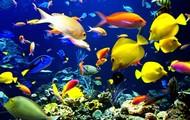 Aquarium Monitering