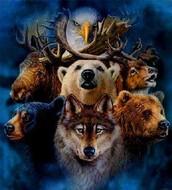 Conoce los mundos invisibles y apoya tu crecimiento con animales de poder!!