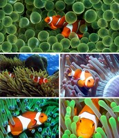 The Clownfish Home