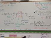 Ms. Valenzuela's Classes ...Artes de lenguaje nivel I y II