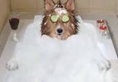 washing your dog