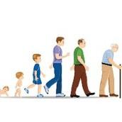 Shorter life span