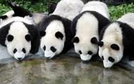 panda protection