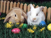 A day where kids can find yummy Easter eggs