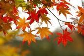 סרטון על הסתיו