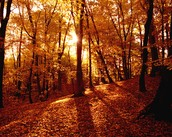 Fall scences