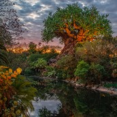 FAQs about nighttime experiences at Disney's Animal Kingdom