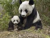 Similar Pandas