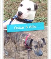 Oscar & Allie  (Bonded Pair)