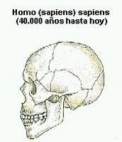 El crani