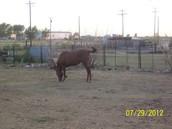 My horse named Bonita