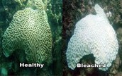 Don't let them bleach the reef