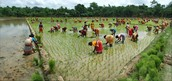 Bangladesh people working in agriculture