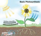 photosynthesis step 1