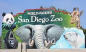 Visit the San Diego Zoo
