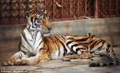 Reasons of Endangerment