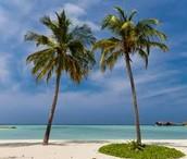 Palm  tree adaptation