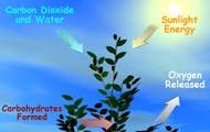 The Cycle Of Photosyntesis