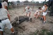 Animals Treament