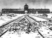 Prisoners Life During the Holocaust
