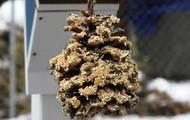 Pine Cone Bird Feeders!!!