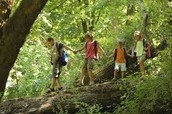 Guided Hike,---- Sundays at 1:00