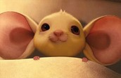 This is Despereaux as a cute little mouse baby.