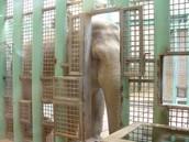 Animals treatment